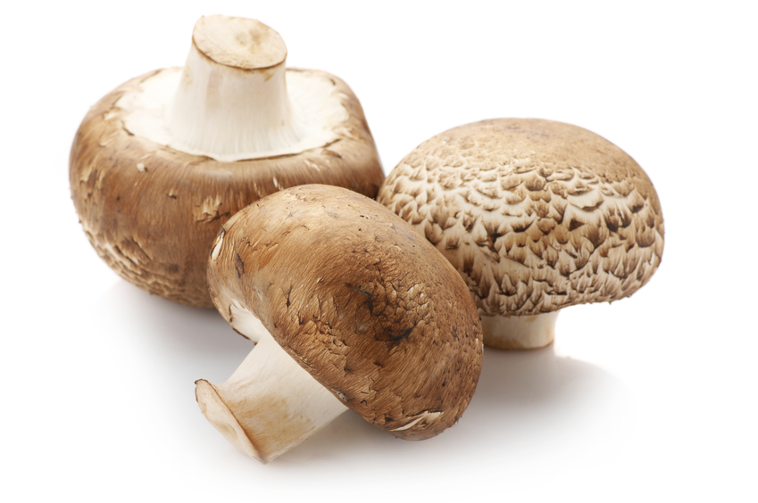 Three brown cap mushrooms isolated on white background.